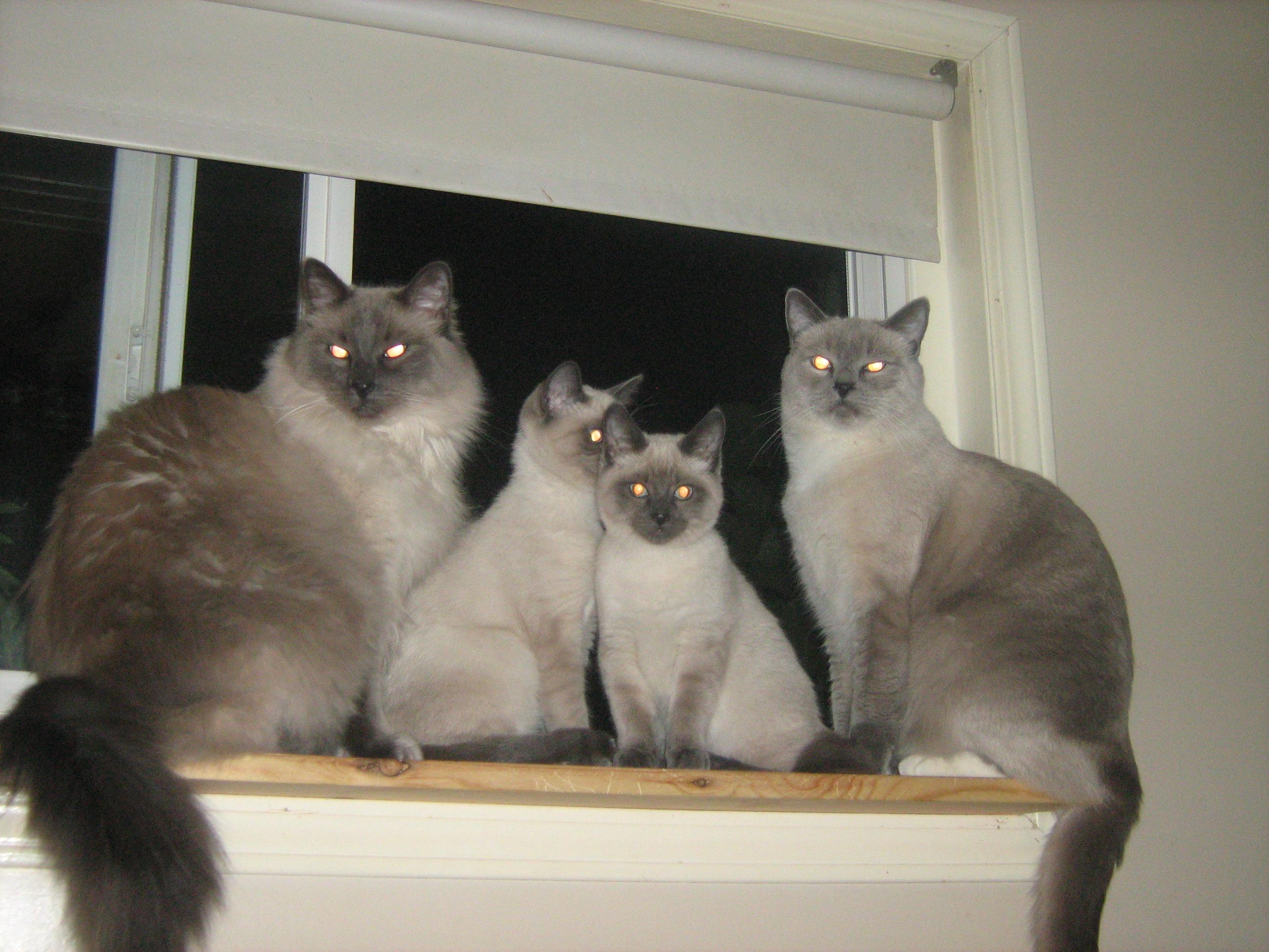 Hook,Zena,Zara,Brady